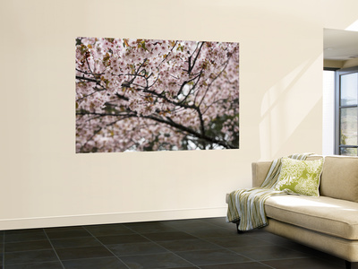 Cherry Blossums (Sakura) Along Cherry Blossum Street in Shizunai Giant Art Print