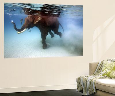 Elephant 'Rajes' Taking Swim in Sea Print by Johnny Haglund