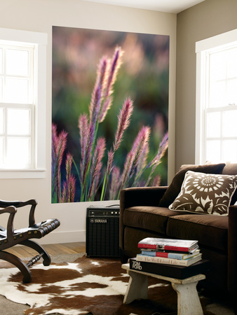 Grass Seed Heads Plakater af Paul Kennedy