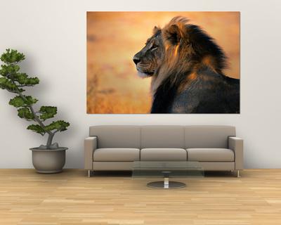 Dospělý samec lva afrického Giant Art Print