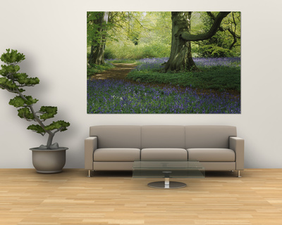 Bluebells in a Forest, Thorp Perrow Arboretum, North Yorkshire, England Prints