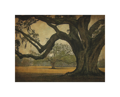 Two Oaks in Rain, Audubon Gardens reproduction procd gicle