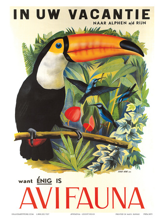 Avifauna Bird Park: Holland c.1951 Prints by Guust Hens