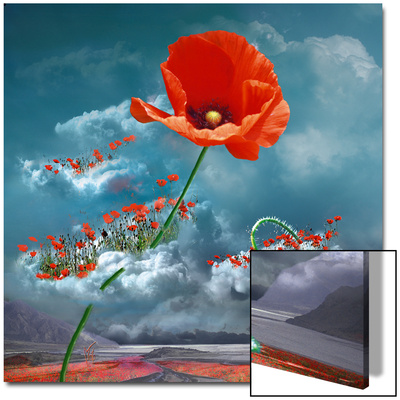 Le Coquelicot Indisciplin Art on Acrylic