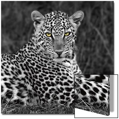 Leopard Portrait Posters van  Ortega