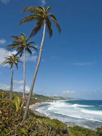 Bathsheba Beach, Barbados, Windward Islands, West Indies, Caribbean, Central America Photographic Print