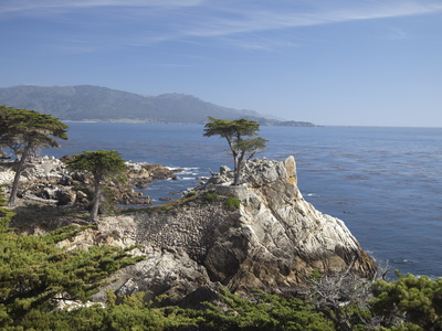 Lonely Pine on 17 Mile Drive Near Monterey, California, United States of America, North America Photographic Print by Donald Nausbaum