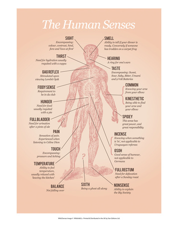 The Human Senses Posters by Stephen Wildish