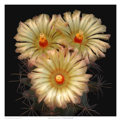 Scheer's Cory Cactus Prints by Richard Reynolds