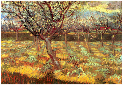 Vincent Van Gogh Apricot Trees in Blossom Art Print Poster Posters
