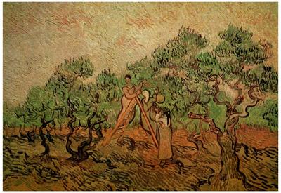 Vincent Van Gogh Olive Picking Art Print Poster Posters