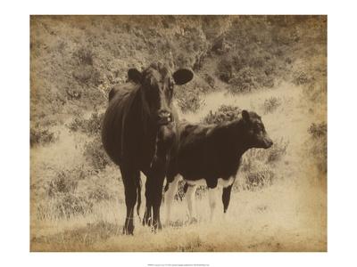 Lone Star Cows I Prints by Jarman Fagalde