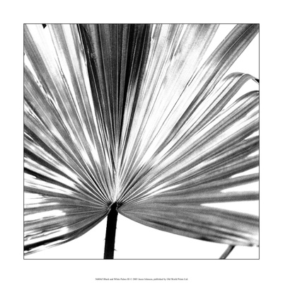 Black and White Palms III Posters by Jason Johnson