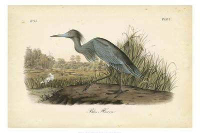 Audubon's Blue Heron Art by John James Audubon