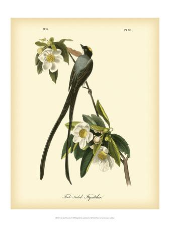 Fork-Tailed Flycatcher Prints by John James Audubon