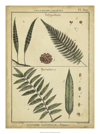 Diderot Antique Ferns III Posters by Daniel Diderot
