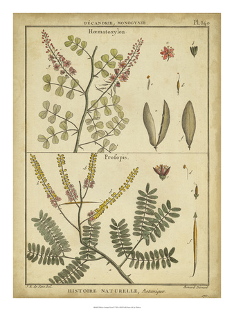 Diderot Antique Ferns II Prints by Daniel Diderot