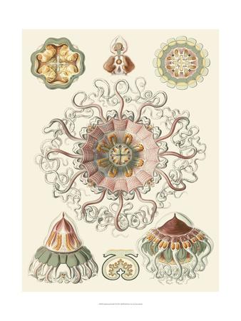 Sophisticated Sealife II Posters by Ernst Haeckel
