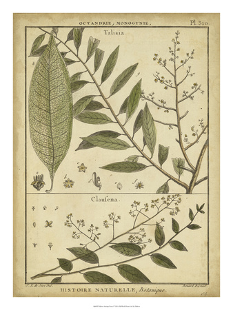Diderot Antique Ferns I Poster by Daniel Diderot