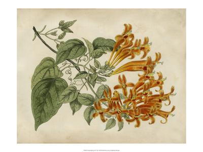 Tropical Beauty III Prints by Sydenham Teast Edwards