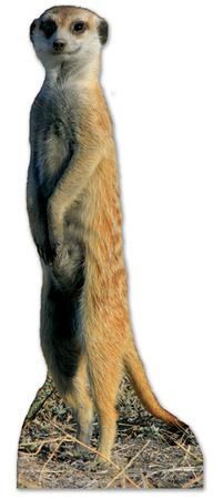 Meerkat Figura de cartón