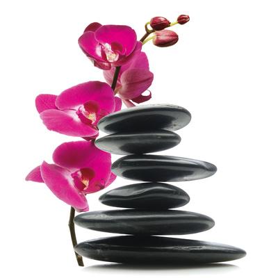 Floral Balance Poster