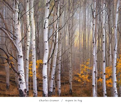 Aspen in Fog Posters by Charles Cramer
