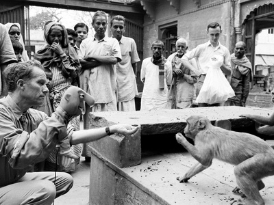 Puppeteer Bil Baird playing with a monkey, March 1962. Premium Photographic Print by James Burke