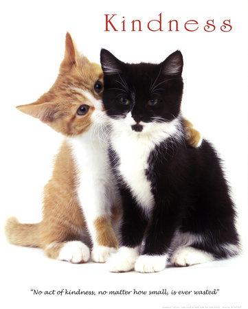 Kindness Two Cute Kittens Poster