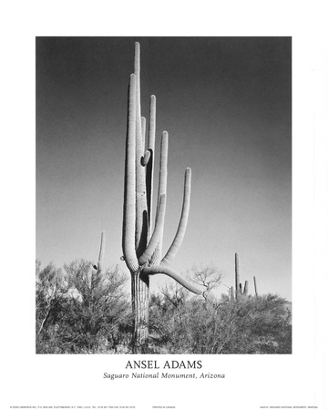 Saguaro National Monument Arizona 写真 : アンセル・アダムス