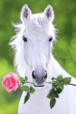 White Horse (Holding Pink Rose) Art Poster Print Photo