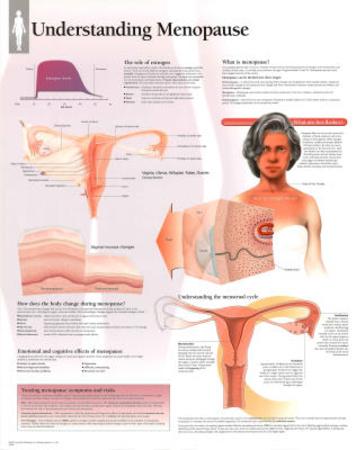 Laminated Understanding Menopause Educational Anatomy Poster Posters