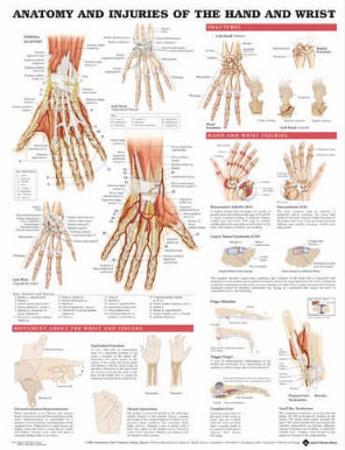Anatomy and Injuries of the Hand and Wrist Anatomical Chart Poster Print Photo