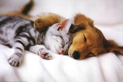 Cuddles (Sleeping Puppy and Kitten) Art Poster Print Kunstdrucke