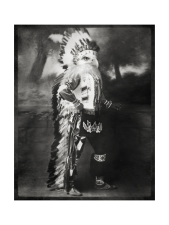 Chief Shikoba Featherbeard Posters by  Grand Ole Bestiary