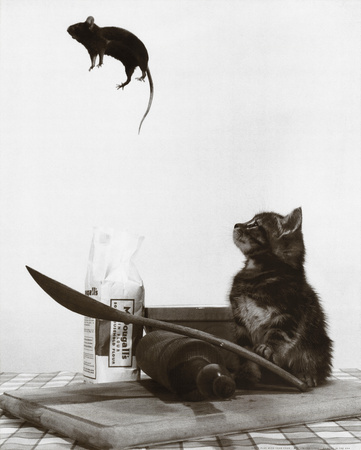 Cat playing with mouse food by flipping it into the air, black and white photo funny pic of cat