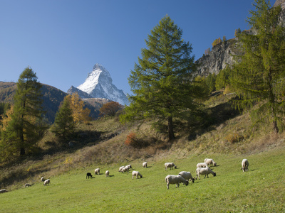 Zermatt, Valais, Swiss Alps, Switzerland, Europe Photographic Print by Angelo Cavalli