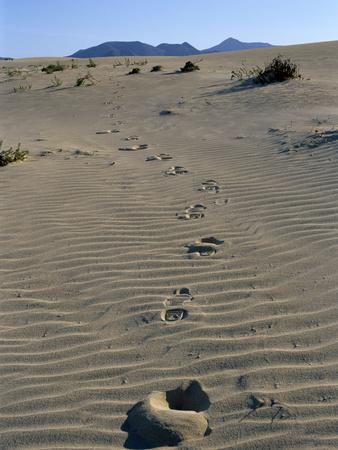 Footprints Through Sand Dunes, Near Corralejo, Fuerteventura, Canary Islands, Spain, Europe Photographic Print by Stuart Black