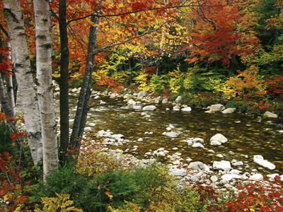 Swift River with Aspen and Maple Trees in the White Mountains, New Hampshire, USA Fotografisk tryk af Darrell Gulin