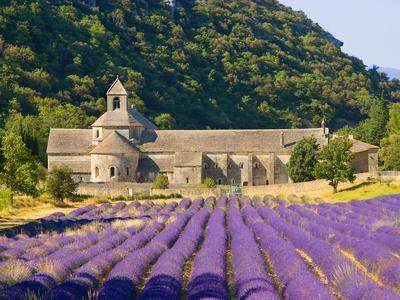 Cistercian Monastery of Senanque Beside Lavender Field, Provence Region, Gordes, France Photographic Print by Jim Zuckerman