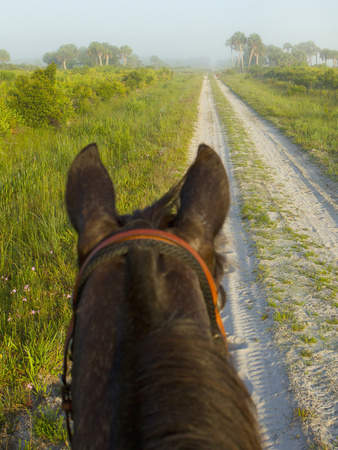 Horse Trails at Kissimmee Prairie Preserve State Park, Florida, Usa Photographic Print by Maresa Pryor