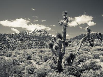 USA, Nevada, Las Vegas Area, Mt. Charleston, Mountain Landscape Photographic Print by Walter Bibikow