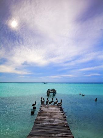 Venezuela, Archipelago Los Roques National Park, Madrisque Island, Pelicans on Pier Photographic Print by Jane Sweeney
