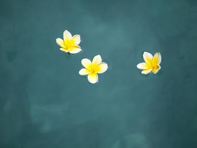Bali, Ubud, Franjipani Flowers Float on a Swimming Pool Fotografie-Druck von Niels Van Gijn