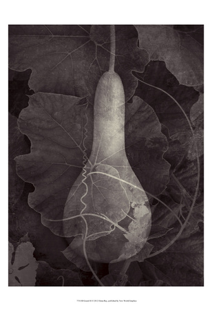Gourd III Posters by Elena Ray