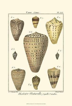 Cone Shells, Pl. 333 Posters by Denis Diderot