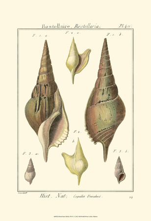 Rostellaire Shells, Pl. 411 Posters by Denis Diderot