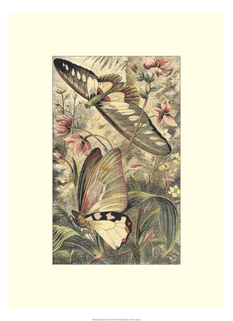 Dancing Butterfly I Giclee Print