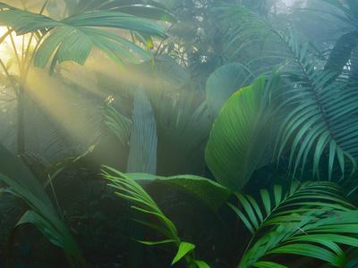 Rainforest Vegetation in Morning Light Photographic Print by Frans Lanting