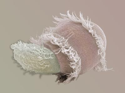 Didinium, Didinium Nasutum, Is a Predatory Protozoan, it Eats Other Protozoans Photographic Print by Aaron Bell
